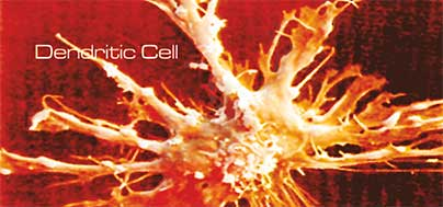 Dendritic cell therapy, urological cancers